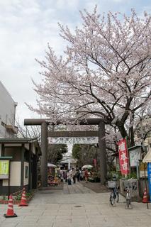 亀戸香取神社植木市