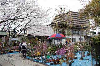 日本最古の植木市